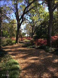 image of Bok Gardens