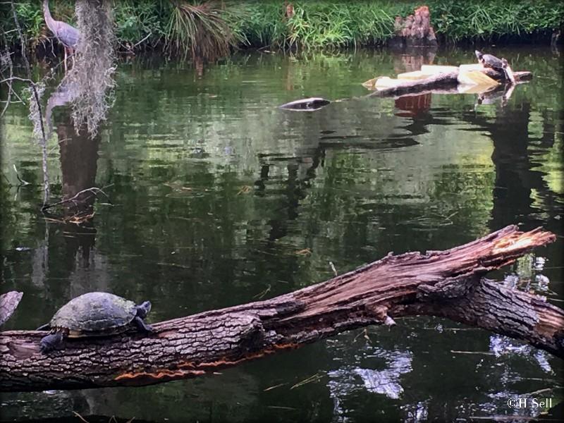 IMG_1978_turtle-pond
