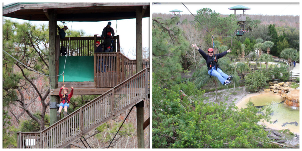 images ziplining over gators