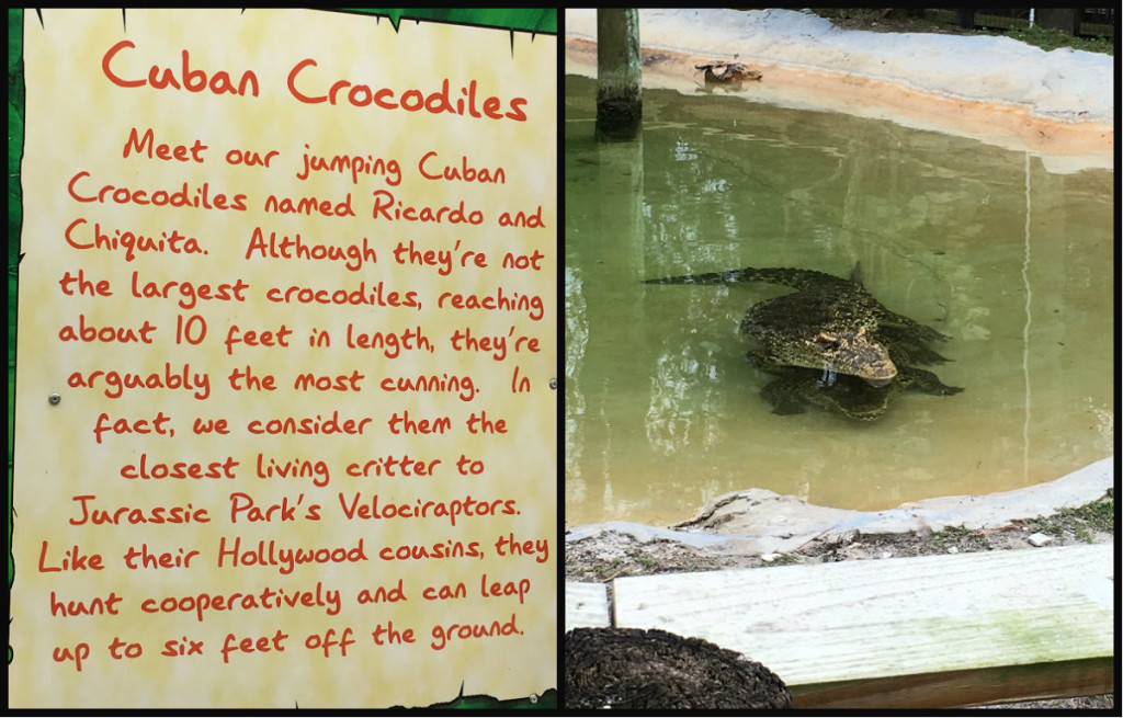 Cuban Crocs